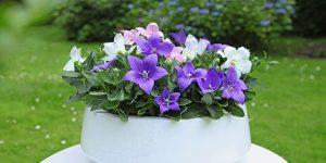 Conheça as novas flores e plantas ornamentais lançadas na Expoflora